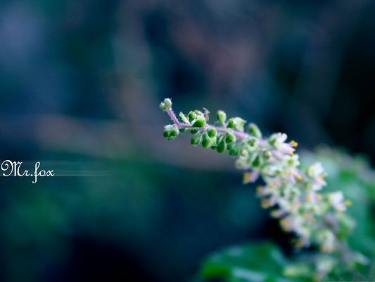 click to free download the wallpaper--Nature Landscape Photography, Flowers in Bud, the Best is Yet to Come