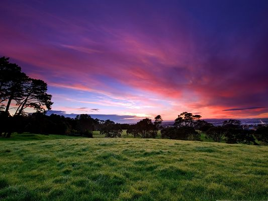 click to free download the wallpaper--Nature Landscape Pic, Green Grass and Tall Trees, Under the Pink Sky
