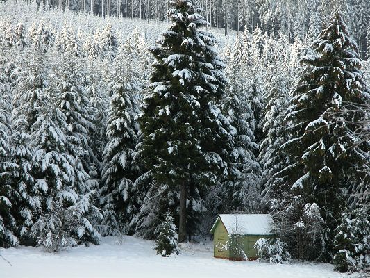 Nature Landscape Pics, Snow Trees in Winter, a Small Yet Cozy Home