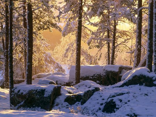 click to free download the wallpaper--Nature Landscape Pics, Snowy Pine Forest, Sunshine Breaking in, Will Snow be Gone?