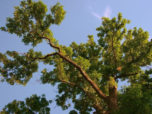 Nature Landscape Pics, an Imposing Tree Under the Blue Sky, is Great and Impressive