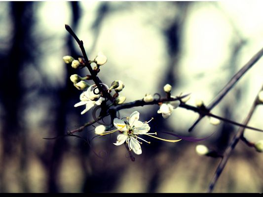 Nature Landscape Pics with Flowers, Isolated Cherry Flower in Bloom, Impressive in Look
