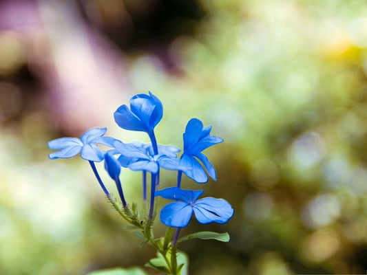click to free download the wallpaper--Nature Landscape Picture, Blue Flowers in Bloom, Fuzzy Background