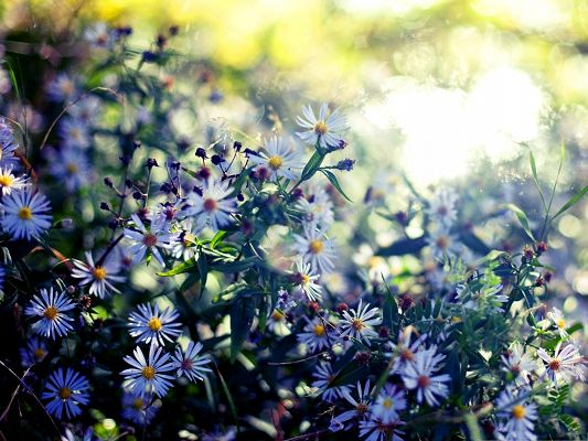 Nature Landscape Picture, White Flowers and Green Leaves, Pouring Sunshine