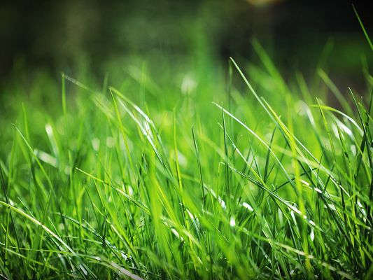 Nature Landscape Wallpaper, a Full Eye of Green Grass, Protective of the Eyes