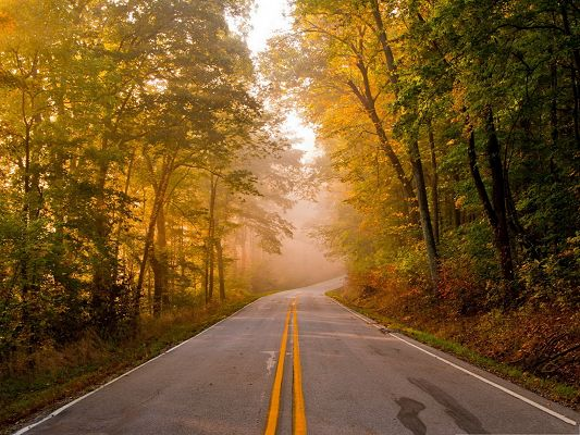 click to free download the wallpaper--Nature Landscape of the Road, Tall Trees in the Stand, Embracing the Clean Road