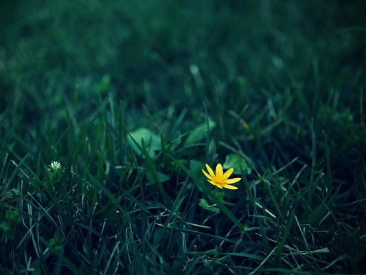 click to free download the wallpaper--Nature Landscape with Flower, Small Yellow Flower Among Green Grass