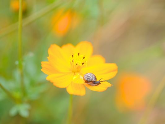 click to free download the wallpaper--Nature Landscape with Flowers, Little Snail on Yellow Flower, Incredible Scene
