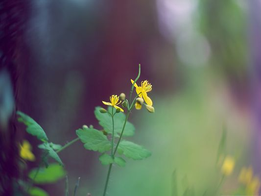 click to free download the wallpaper--Nature Landscape with Flowers, Tiny Yellow Flower and Green Leaves