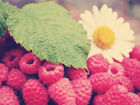 click to free download the wallpaper--Nature Landscape with Fruits, Raspberries Under Flowers and Leaves, Delicious and Nice-Looking