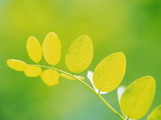 Nature Landscape with Plants, Round Yellow Leaves on Green Background, Great and Protective Wallpaper
