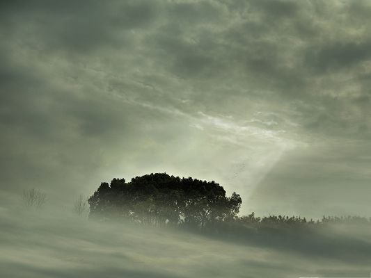 click to free download the wallpaper--Nature Misty Landscape, Tall Trees on Cloudy Day, Sunlight Breaking Through