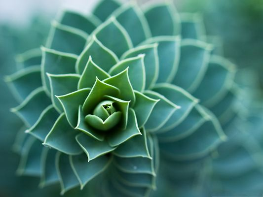 click to free download the wallpaper--Nature Plants Picture, Beautiful and Spiral Plant, Wide Open Leaves