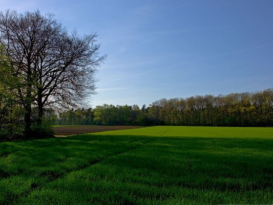click to free download the wallpaper--Nature Spring Landscape, Green Endless Field, a Tall Tree Alongside
