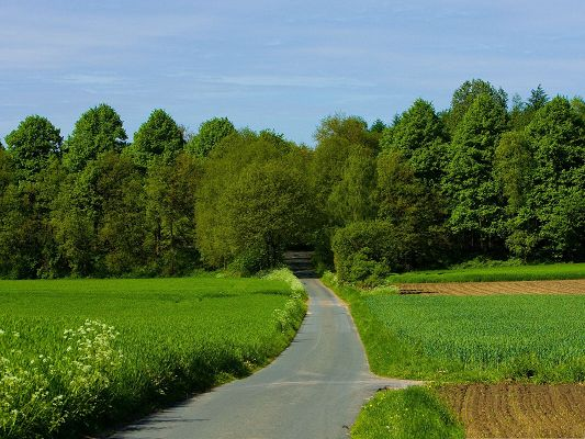 click to free download the wallpaper--Nature Summer Landscape, Green Grass Alongside the Clean and Narrow Road