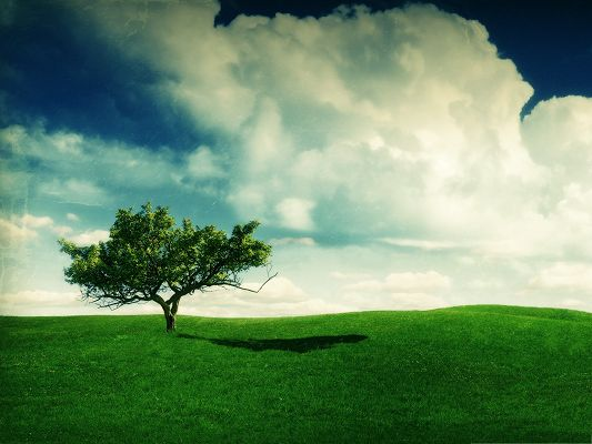 click to free download the wallpaper--Nature Summer Landscape, Tall Tree and Green Grass, Prosperous Scenery