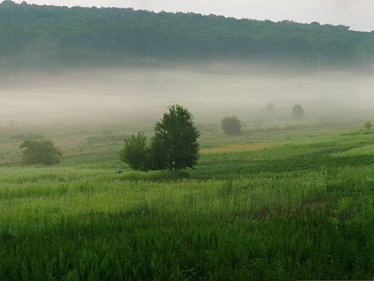 Nature Summer Landscape, Tall Trees and Green Grass, Foggy Scene