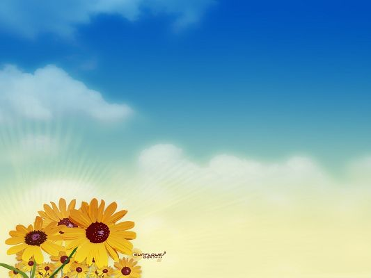 click to free download the wallpaper--Nature and Flowers, Blooming Sunflowers, Smile Toward the Sky