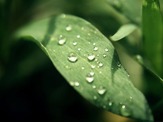 click to free download the wallpaper--Nature and Plant, Waterdrops on Green Leaves, Clean and Fresh Scene