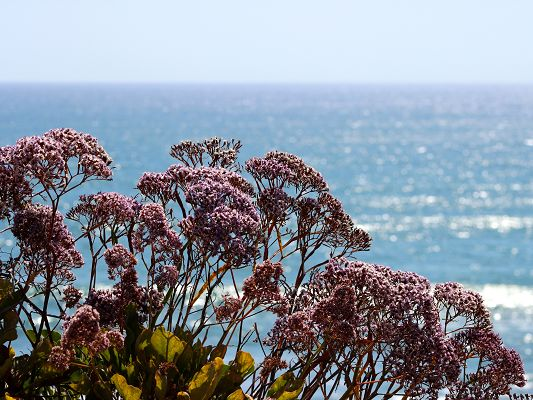 click to free download the wallpaper--Ocean Flowers Photography, Blooming Flowers by the Sea, Amazing Scene