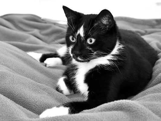 click to free download the wallpaper--Oceiiette Cat Image, Cute Cat Comfortably Lying, Black and White Style