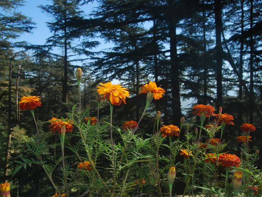 click to free download the wallpaper--Orange Flower Picture, Beautiful Flower in Bloom, Tall Trees Around to Protect