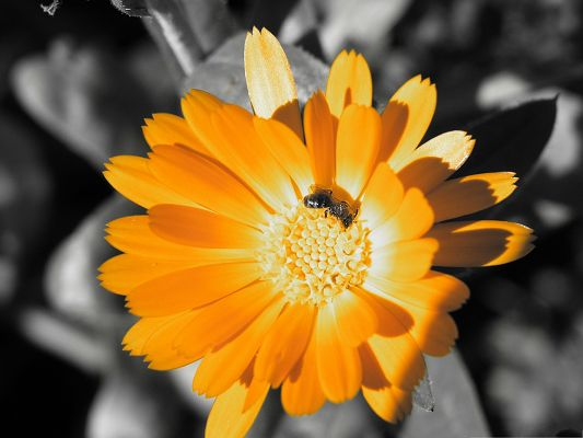 click to free download the wallpaper--Orange Flower Pictures, Blooming Flowers Under the Sun, Deligent Bees