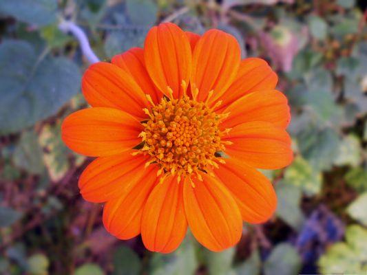 Orange Flowers Image Orange Flower In Bloom Long And