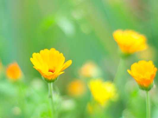 click to free download the wallpaper--Orange Flowers Image, Tiny Blooming Flowers on Green Background, Amazing Look