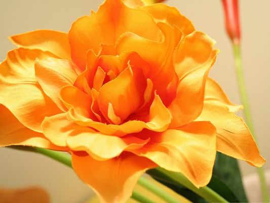 click to free download the wallpaper--Orange Flowers Picture, Beautiful Flower in Bloom, Amazing Look