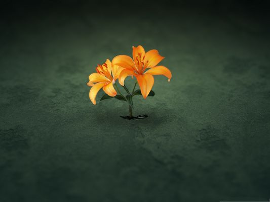 Orange Flowers Picture, Tiny Flower in Bloom, Breaking the Earth