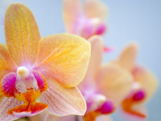 click to free download the wallpaper--Orchid Flowers Picture, Small and Beautiful Flowers in Bloom in the Blue Sky