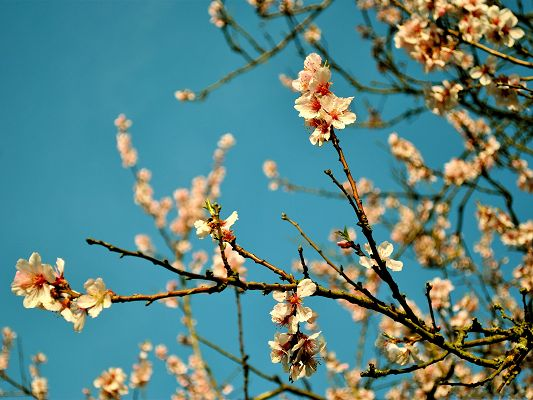 click to free download the wallpaper--Peach Flowers Image, White and Tiny Flowers Under the Blue Sky