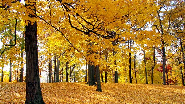 Photos of Beautiful Nature - Yellow Leaves Are Falling, Great to Step on, Amazing Autumn Scene