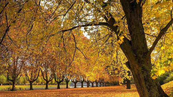 Photos of Beautiful Scenes – Typical Autumn Scene, Yellow and Fallen Leaves, Great and Enjoyable Place