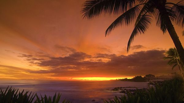Photos of Natural Scenery - The Golden and Cloudy Sky, the Peaceful Sea, Coconut Trees Alongside