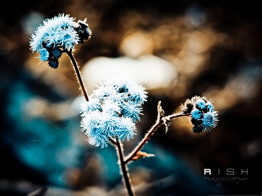 click to free download the wallpaper--Photos of Nature Landscape, Winter Flowers Covered with Snow, Be Tough and Survive
