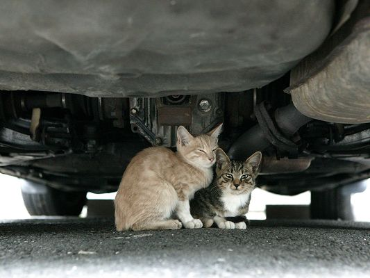 Pic of Homeless Cats, Two Homeless Kittens, Sleep Under the Car