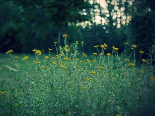 click to free download the wallpaper--Pic of Yellow Flower, Tiny Flower in Bloom, Green Grass Around