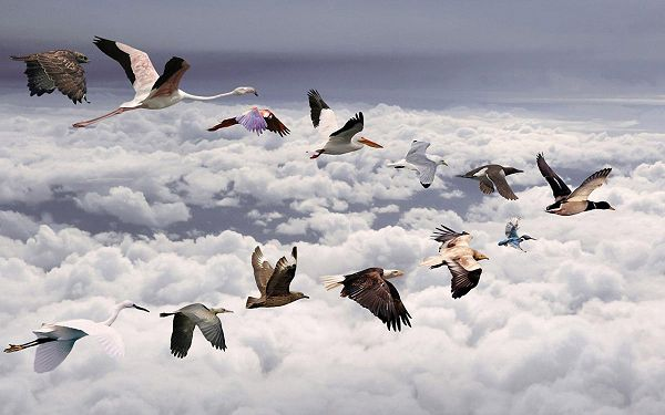 Pics of Animals - All Birds Post in Pixel of 1280x800, A Line of Birds Flying Over Thick Clouds, Great in Look