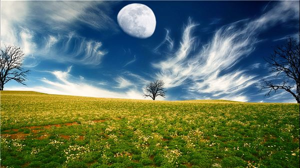 click to free download the wallpaper--Pics of Flower Scene - Yellow and Blooming Flowers, the Lighted Up Sky and the Rising Moon, Time for a Sleep