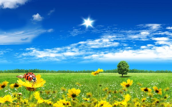 Pics of Flowers - Beautiful Fantasy World in Pixel of 1920x1200, Ladybug on a Yellow Flower, Grab Maximum Amount of Attention