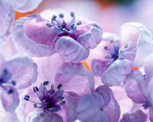 click to free download the wallpaper--Pics of Flowers - Violet Colors Post in Pixel of 1280x1024, Blooming Flowers, Light in Color, Stay Close and Embrace Each Other
