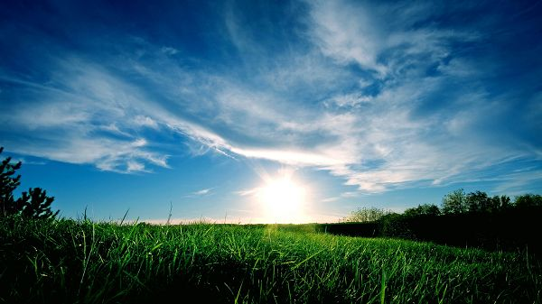 click to free download the wallpaper--Pics of Natural Scene - A Full Eye of Green Grass, the Rising Sun and the Blue Sky, Combine an Incredible Scene