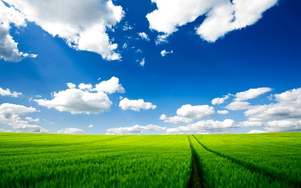 click to free download the wallpaper--Pics of Natural Scene - Pure Nature Post in Pixel of 2560x1600, Green Scene, the Blue and Cloudless Sky, What a Scene!