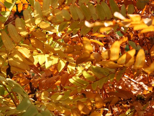 Pics of Natural Scene, Yellow Leaves, Sunlight Breaking in, They Are Shinning and Beautiful