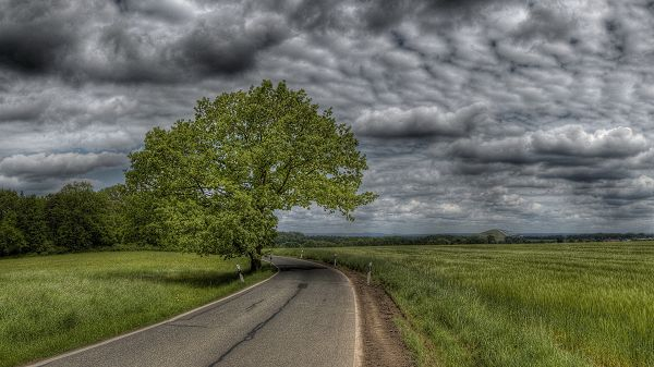 Pics of Natural Scenes - A Tall and Green Tree Among Short Grass, the Dark and Cloudy Sky, a Narrow Road