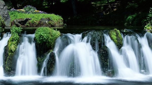 click to free download the wallpaper--Pics of Natural Scenes - Large Waterfall Among the Green Plants, the Scene is Too Good to be True