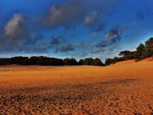 click to free download the wallpaper--Pics of Nature Landscape, Yellow Sand, the Blue Sky, Green Plants, Incredible Look