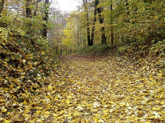 Pics of Ntaural Scene, Yellow Fallen Leaves, Typical Forest Scene, is a Perfect Place to Stay
